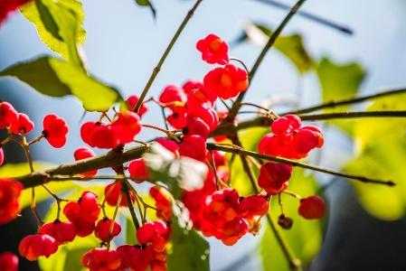 Streuwiesen, Blumen und Vögel entdecken