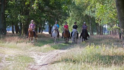 Reiten auf Feldwegen durch die Altmark