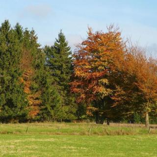 Herbstwald in Konzen