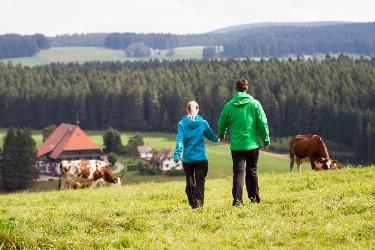 Schönwald - Gutenrundweg