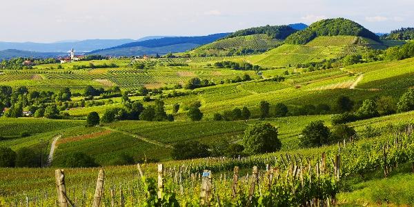 Das Markgräflerland südlich von Freiburg ist Teil der Badischen Weinstraße