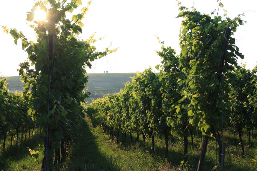 Badische Weinstraße | Weinschleife Murgtal