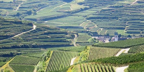 Weinbergterrassen kennzeichnnen die Weinregion Kaiserstuhl