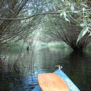 Mit dem Boot durch die Rheinauen