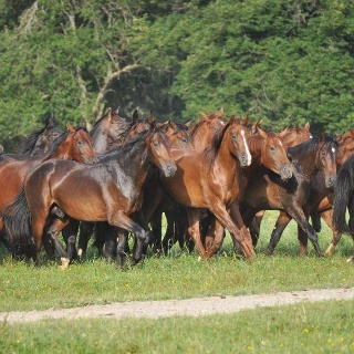 Pferde auf dem Gestüt Schwaiganger