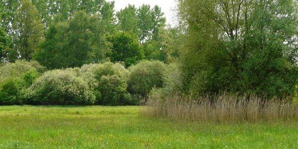 Blick über die Wiesen im Wald