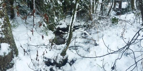 Bächlein im Schnee