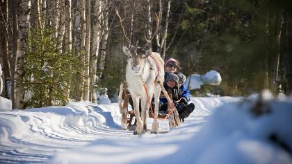 Eine Rentiersafari in Finnland