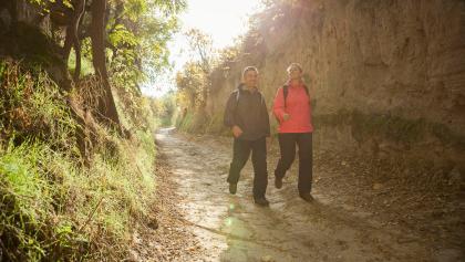 Hohlewege bei Mettenheim