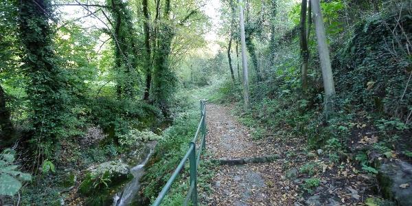 Zunächst geht es über einen Waldweg