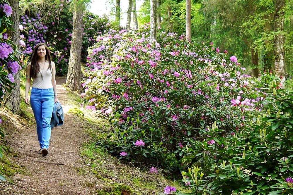 Rhododendronpark Gut Lindenfels