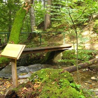 Themenweg - Mythenweg - Timberland Trail - Köhlerweg