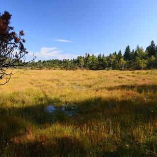 Moorwiese im Taufach-Fetzach-Moos bei Isny-Beuren