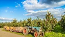 Die Apfelroute mit dem Fahrrad erleben