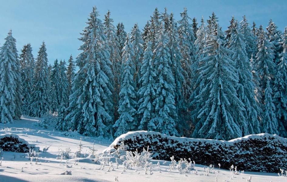 Winter - Bernau Schwarzwald: Spitzenberg-Rundweg