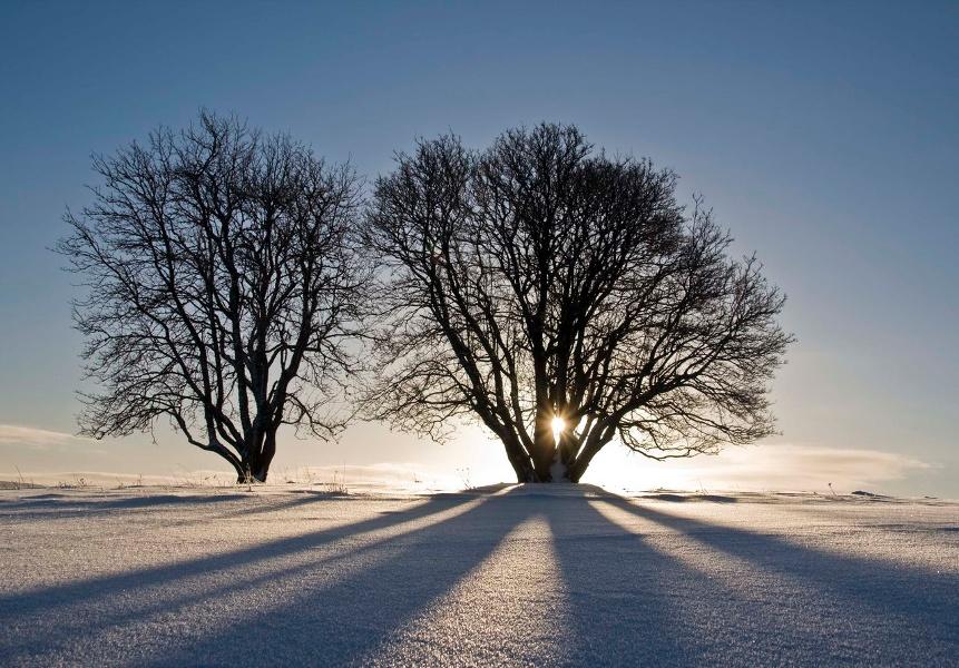 Winter - Bernau Schwarzwald: Vom Loipenhaus über den Stöckerwald nach Innerlehen