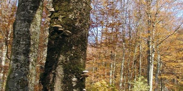 Plitvička šuma