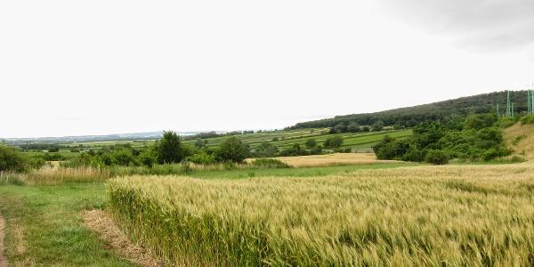 Zwischen Leithagebirge und Rosalia (30.06.2013)
