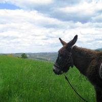 Esel auf dem Wartekopf