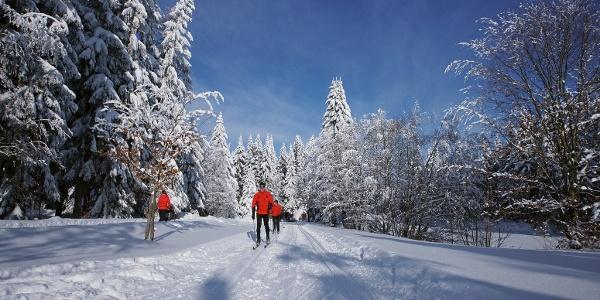 Langlaufen im schönen Sachsen