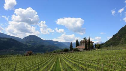 Weinradroute Nord: Auf den Spuren von Lagrein und Sauvignon