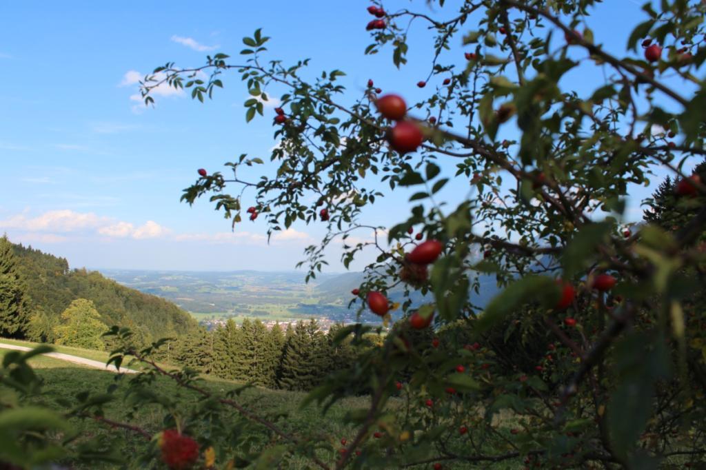 Herbst auf den Grassauer Bergen