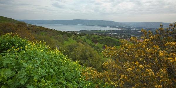 Grüne Vegetation im Norden Israels