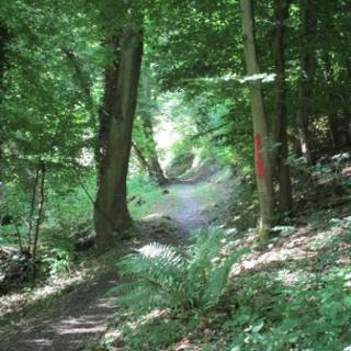 Heimbachtal St. Goar-Fellen
