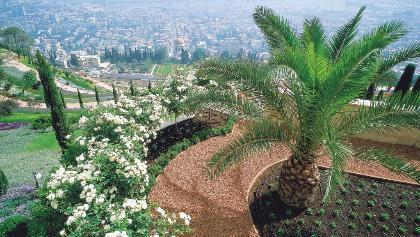 נוף על העיר החיפה מהגנים הבאהים הנמצאים על הר הכרמל