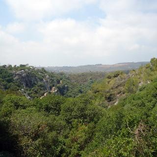מבט על הר הכרמל