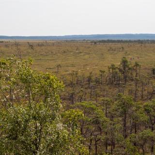 Blick vom Turm auf das Moor