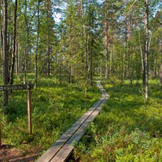 Weg durch den Wald am Abzweig in die Ortschaft Kävsjön