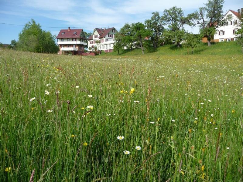 Hochebene um Überberg und Altensteigdorf