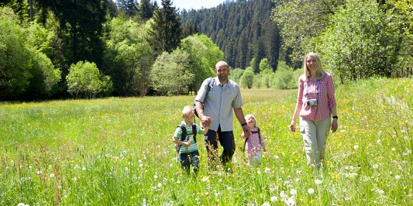 Wanderung im Zinsbachtal