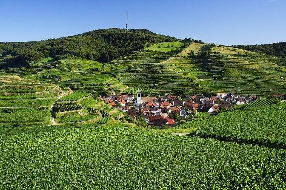 Rennrad Tour nach Breisach und um den Kaiserstuhl von Badenweiler aus