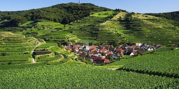 Kaiserstuhl Vogtsburg Blick auf den Totenkop