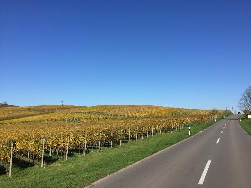 Rennrad Tour Kaiserstuhl und Tuniberg von Badenweiler aus