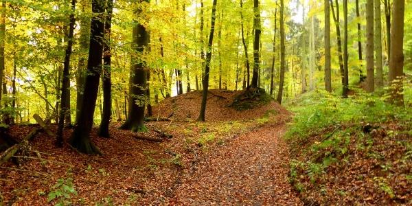 auf dem Weserhöhenweg Richtung Blankenau