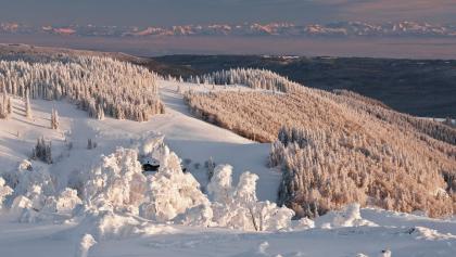 Blick vom Herzogenhorn auf die Alpenkette, versteckt zwischen den Tannen die Krunkelbach-Hütte oberhalb des Bernauer Hochtals.