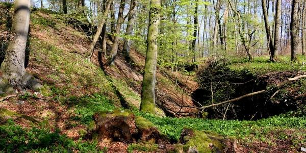 Schutzgraben an der Wildburg