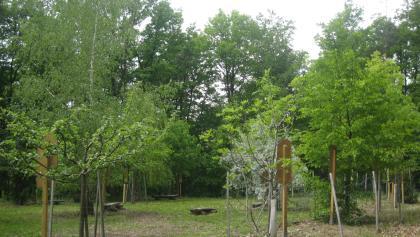keltischer Baumkreis