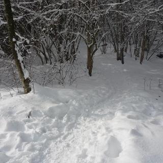 Singletrail Fürstenbrunn im Winter
