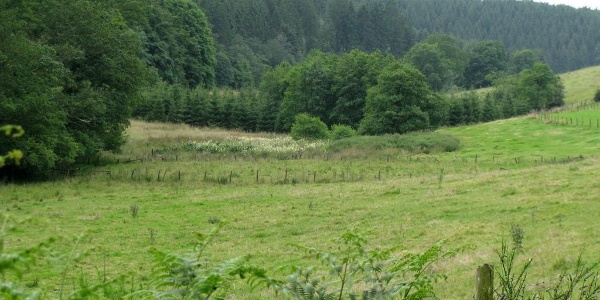 Wiesen und Wald Heppenbach