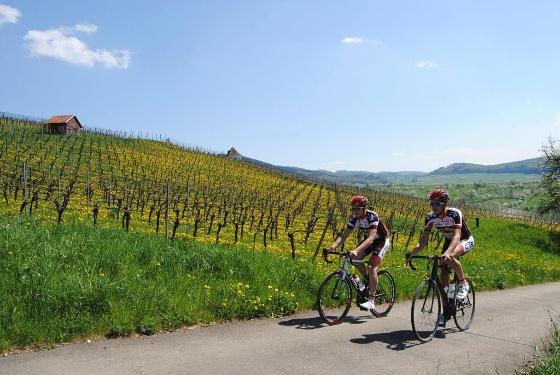 Rennrad Tour Elsass nach Colmar von Badenweiler aus