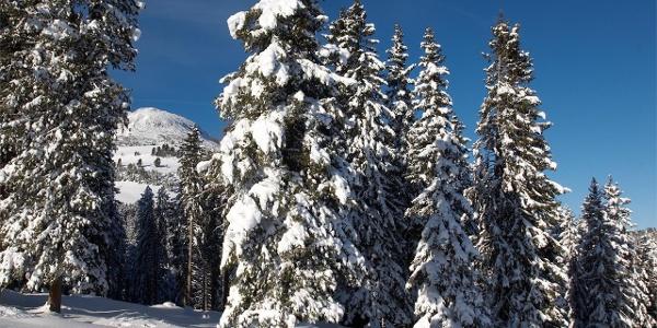 Atmosfera invernale ad Aldino e Corno Bianco