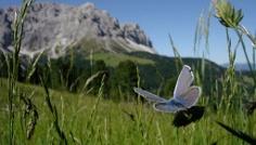 Sommerwanderung: Antermoia - Alfarëi - Lüsner Joch - Glittnerseen