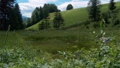 Sentiero naturale e culturale Pirchner Moos-Biotopo