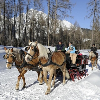 Sleigh rides in Avelengo, South Tyrol