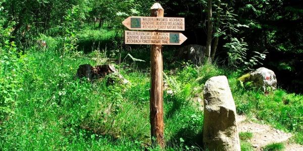 Il sentiero naturalistico tra i boschi di Rio Lagundo