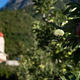 Giro delle mele